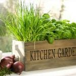 Best Tips to Create Organic Kitchen Garden