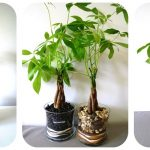 How to Grow Money Plant at Home