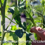Tips for Pruning Plants in your Garden