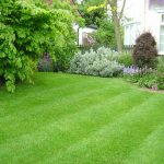 Growing & Maintaining A Healthy Grass Lawn