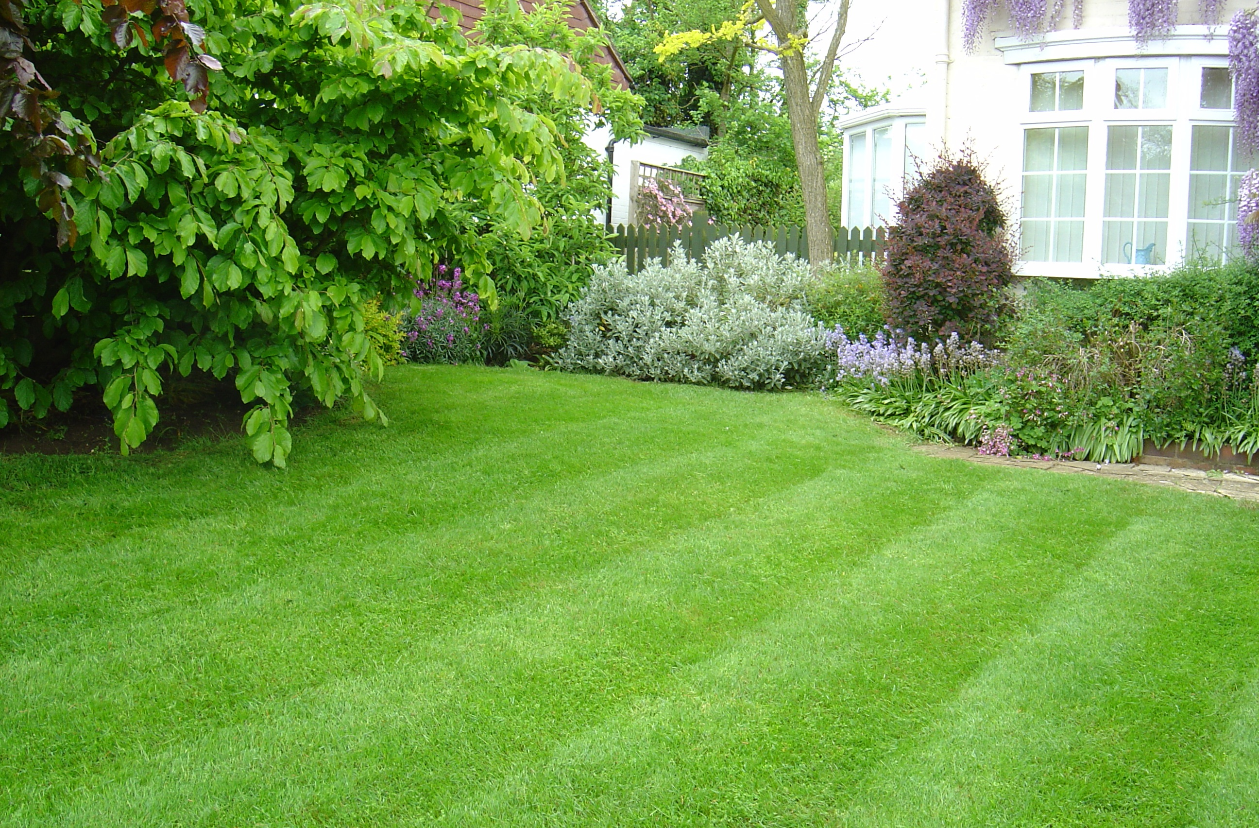 Growing Amp Maintaining A Healthy Grass Lawn Acegardener