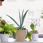 Plants to Grow Indoor and Their Benefits