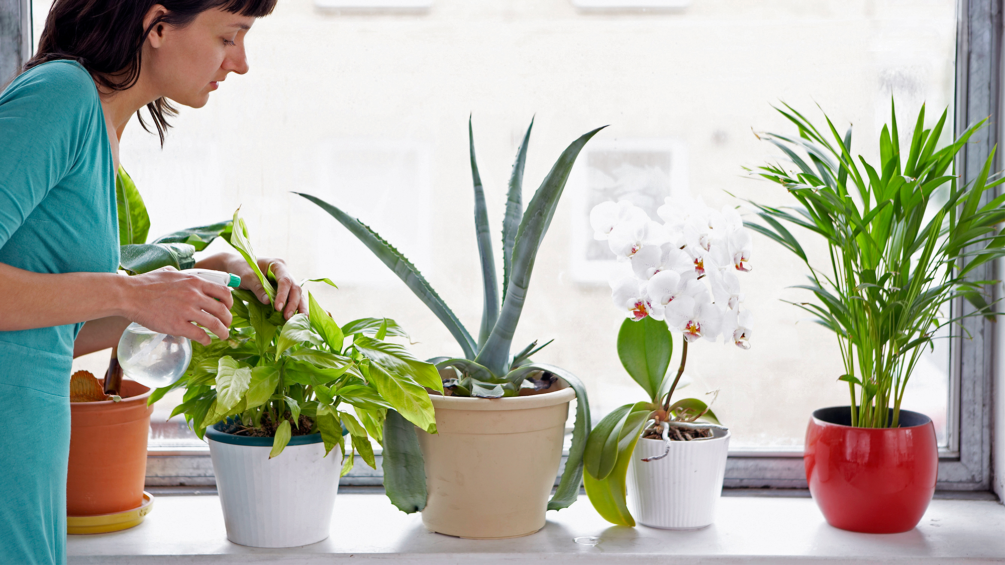 Plants that you can grow indoor and their benefits for Indoor gardening flowers