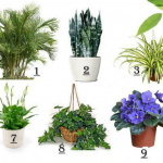 Top 10 Plants That Help to Improve Air Quality at Home