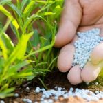 How to choose Right Fertilizer for Your Garden