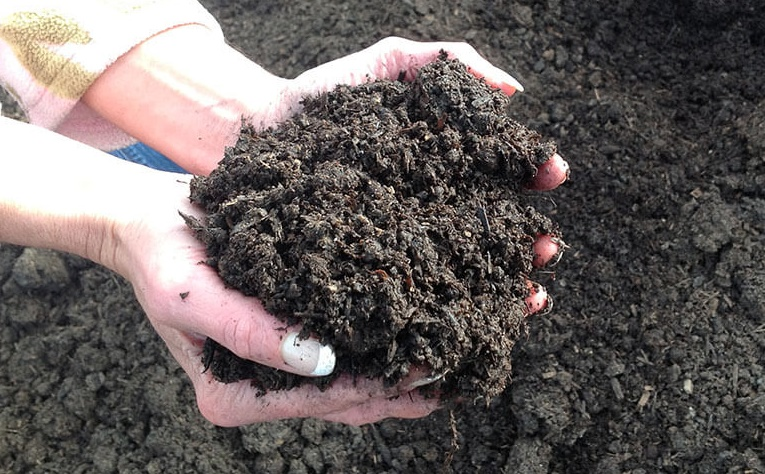 Make Organic Compost Fertilizer at Home