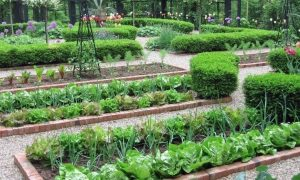 Basic Structure and Functions of the Home Garden