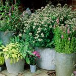 Small Space Gardening Tips