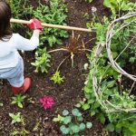 Vegetable Gardening: Suggestions for Beginners