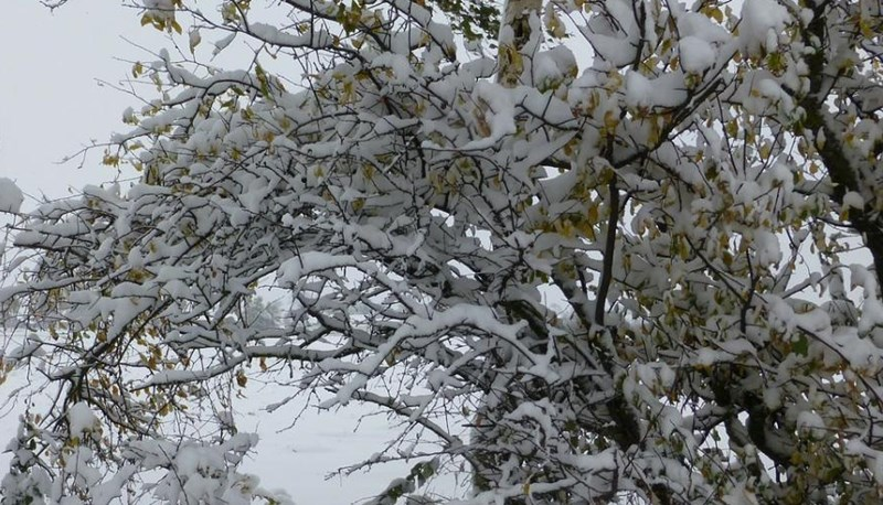 Winter Damage to Shrubs and Trees