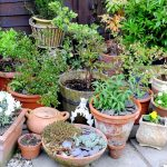 What to plant in a Container Garden
