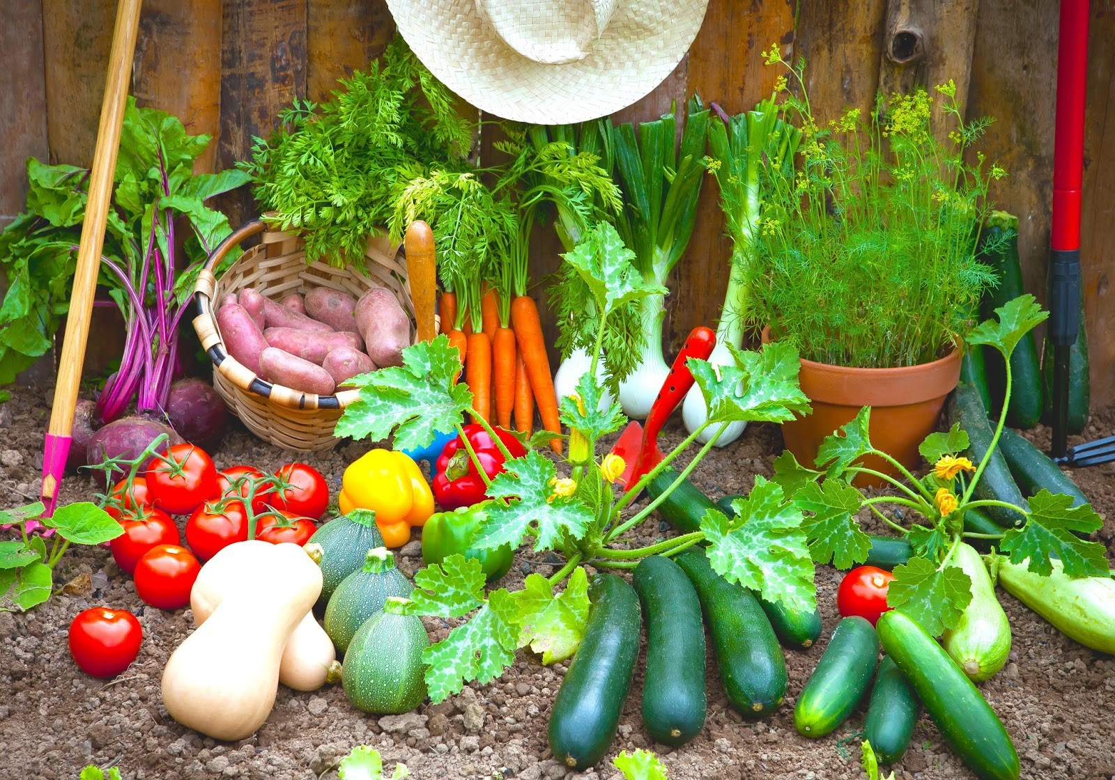 5 vegetable gardening tips that will save your money for Gardening 101 vegetables