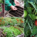 Tips for getting started with container vegetable gardening..!
