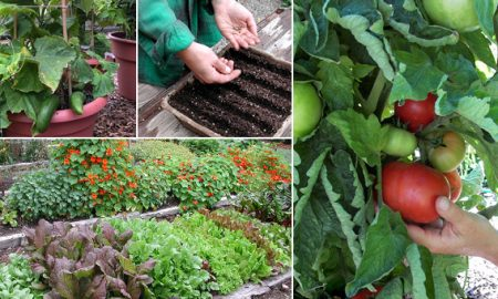 veggiegarden-how-to-grow-your-own-vegetables-and-recipes
