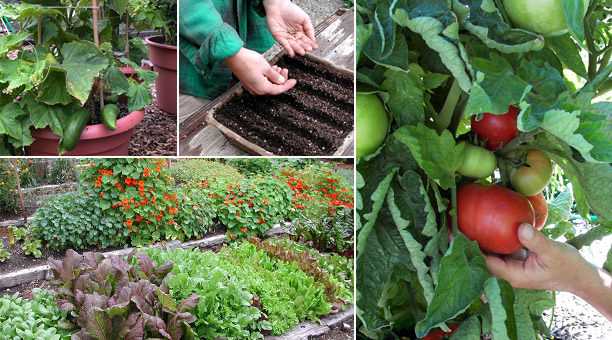 Exceptionnel Tips For Getting Started With Container Vegetable Gardening   Acegardener