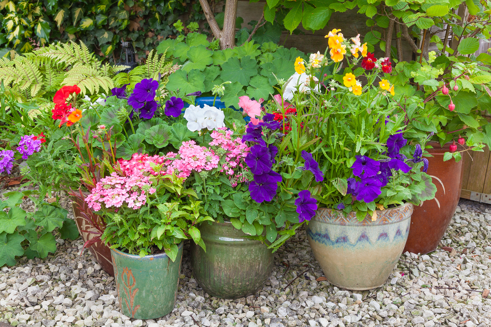 Secret tips for successful container gardening acegardener - Container gardening basics ...