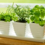 5 Best Herbs that Grow Best in a Garden Container