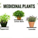 Herbal & Medicinal Plants and their Uses