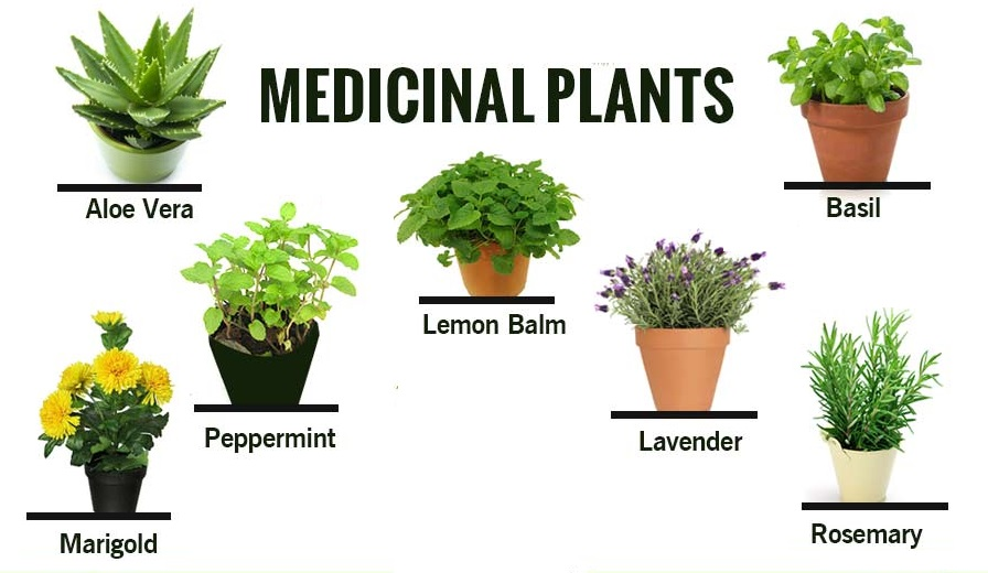MEDICINAL HERBS AND THEIR USES PDF DOWNLOAD