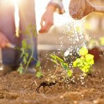 Guidelines to Plant Your First Vegetable Garden