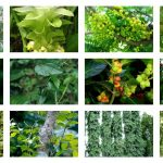 20 Medicinal Plants You Can Find In Your Garden