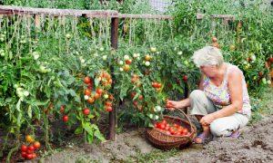 Plan-a-Hanging-Kitchen-Garden