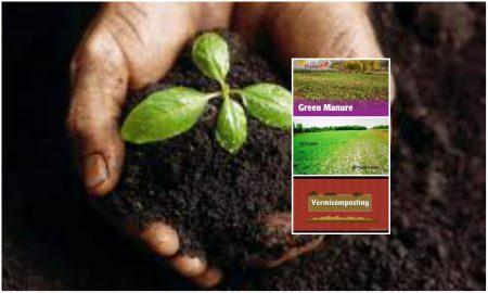 Enrich Soil