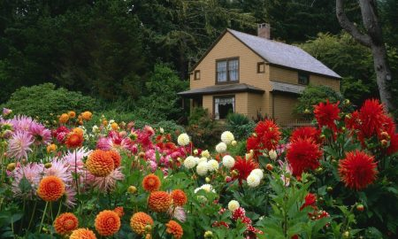 garden-plants-flowering-6