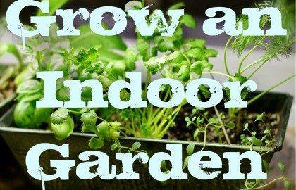 Indor Vegetable Garden