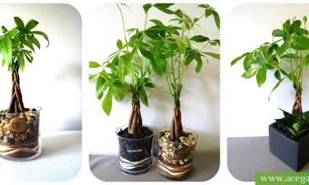 Money -Plant Gardening