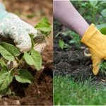 Keep Off The Weeds – Prevention & Control