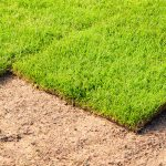 Soil Preparation and Care