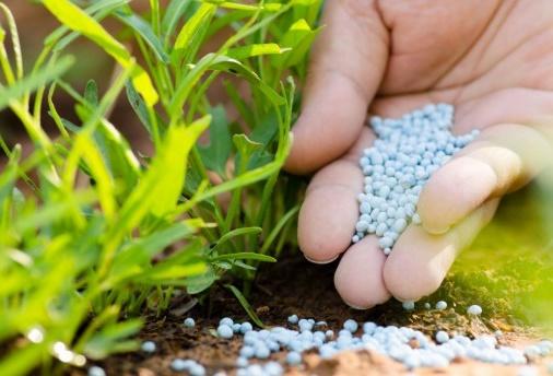 fertilizing-tips