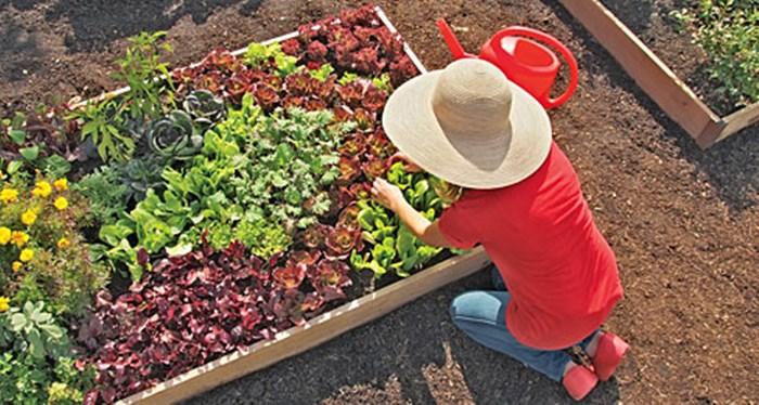 Gardener's New Year's Resolutions