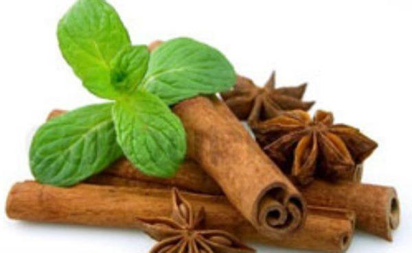 Medicinal Plants Worth Your Garden Space