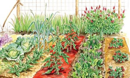 Month by Month Guide to Vegetable Gardening