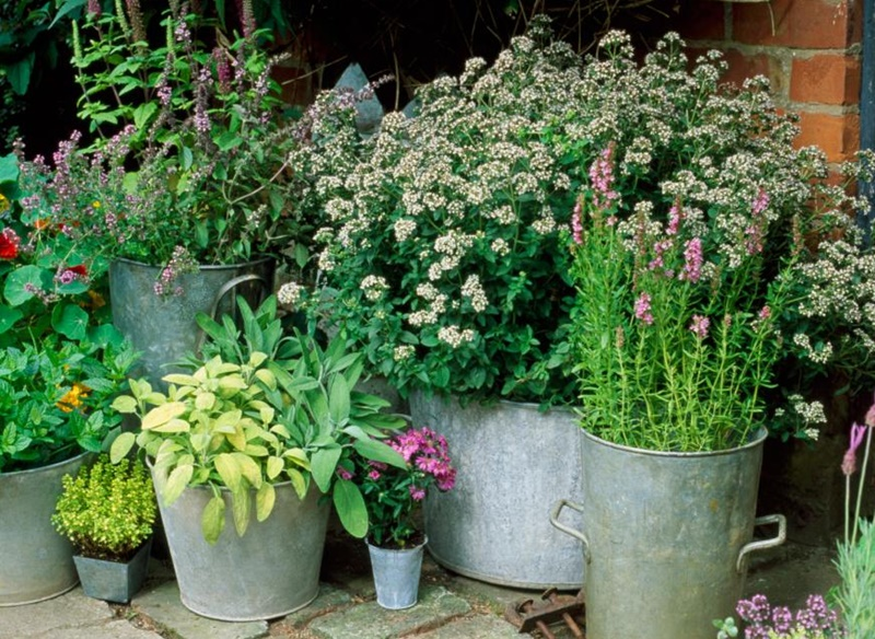 small space container gardening ideas acegardener