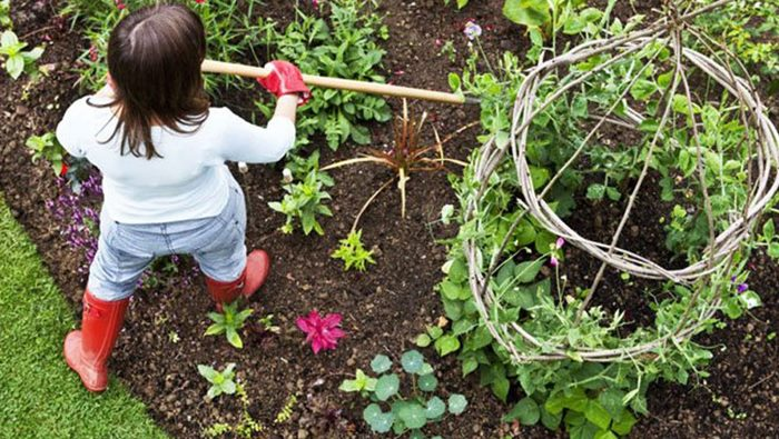 Vegetable Gardening Suggestions For Beginners Acegardener