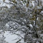 Preventing Winter Damage to Shrubs and Trees