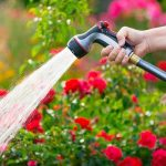 Top 10 Water Saving Tips for Your Garden