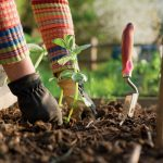 Ten ways to keep your garden healthy