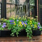 6 Balcony Garden Tips for Summer