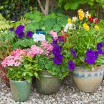 Secret Tips for Successful Container Gardening