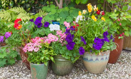 container-gardening-tips
