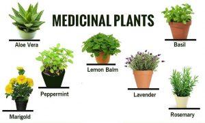 medicinal-plant